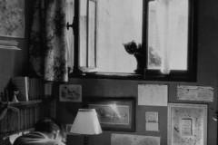 Willy Ronis, Vincent et le chat Paris, 1955.